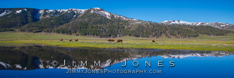 Lamar Valley in Spring